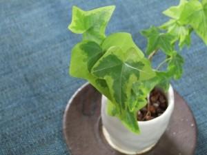 バッファ領域には観葉植物を!