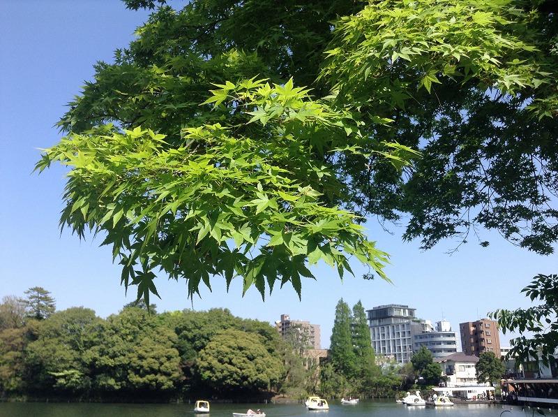 senzokuike-park-0405