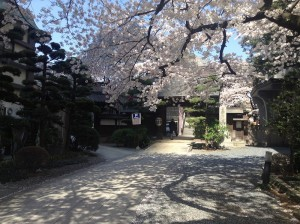 shinjyuku-shinryoku-3