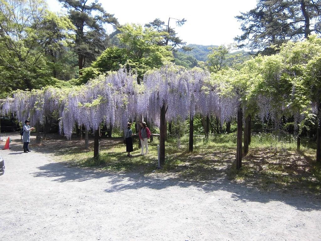 150505-6-chichibu-nagatoro-1402