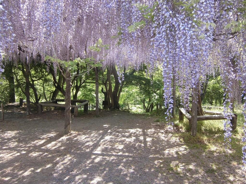150505-6-chichibu-nagatoro-1405
