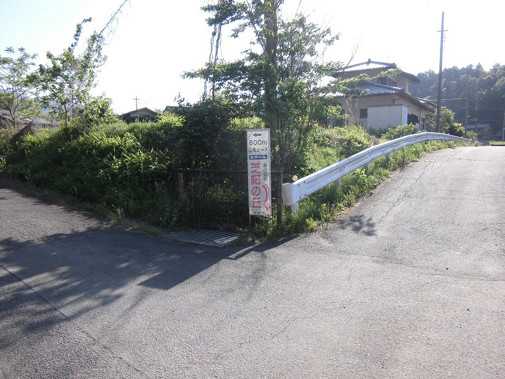 150505hitsujiyama-shibazakura-1147
