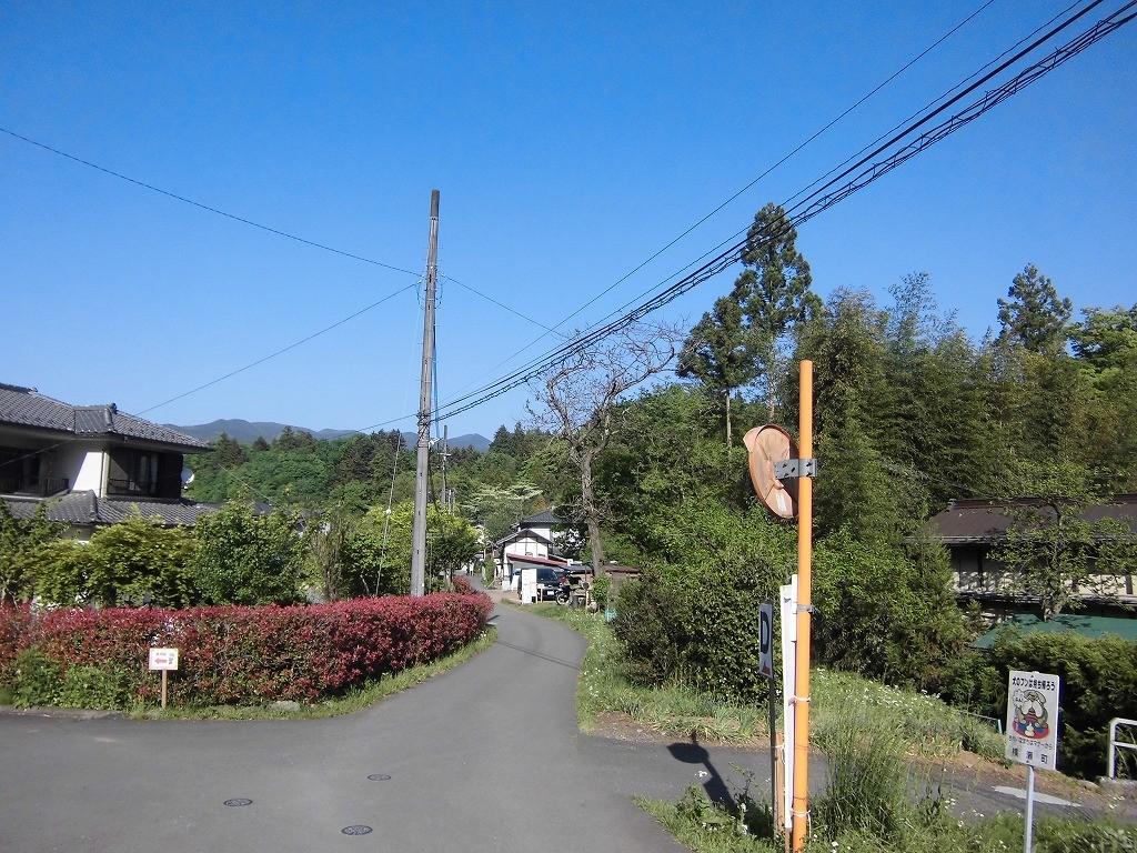150505hitsujiyama-shibazakura-1153