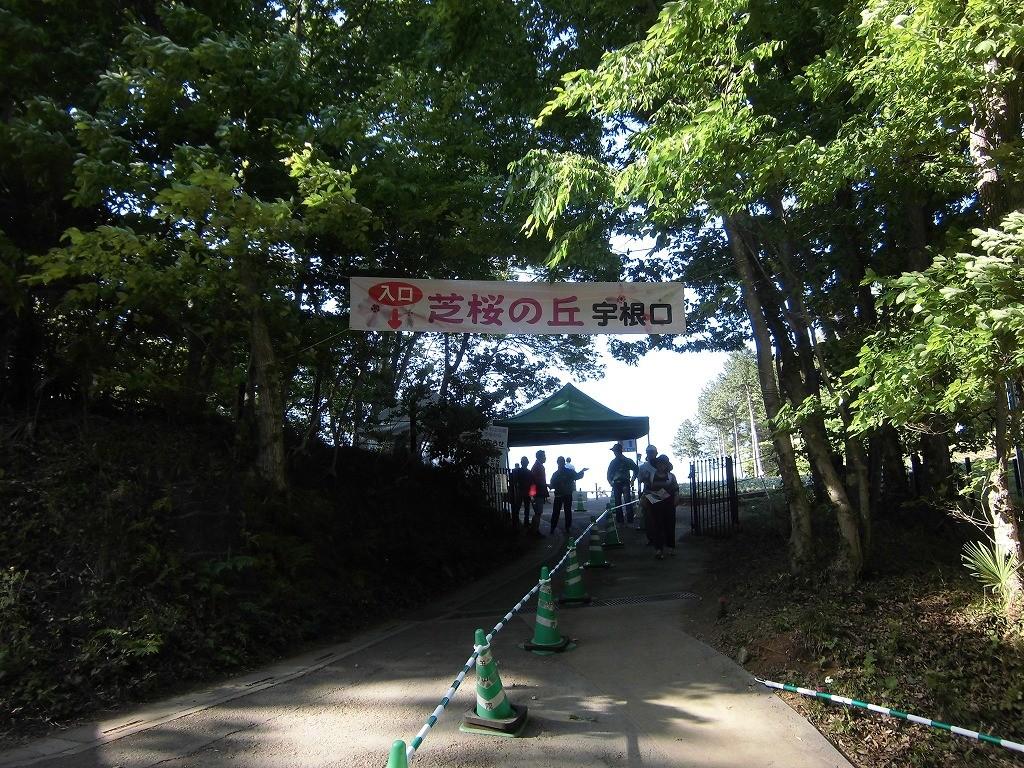 150505hitsujiyama-shibazakura-1156