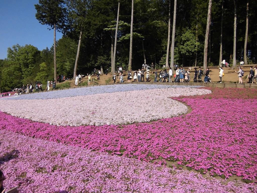 150505hitsujiyama-shibazakura-1168