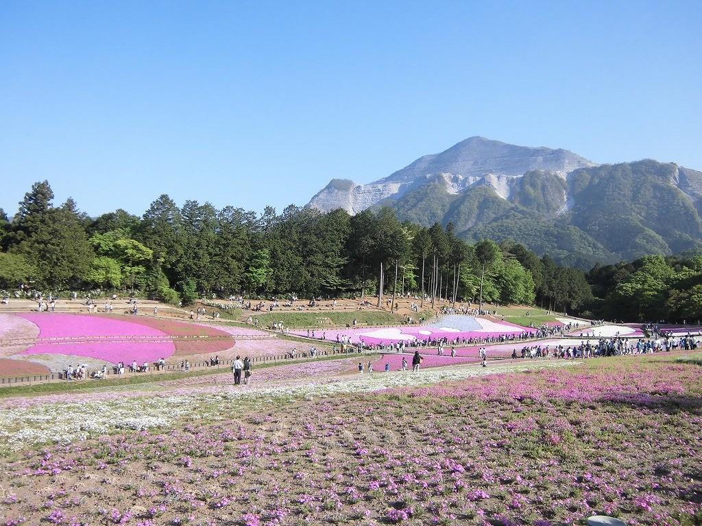 150505hitsujiyama-shibazakura-1184
