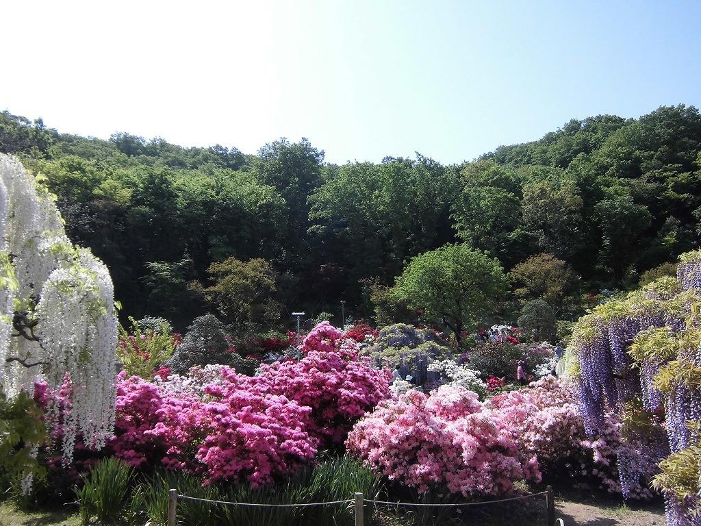 2015-5-2-ashikaga-flowerpark-0875