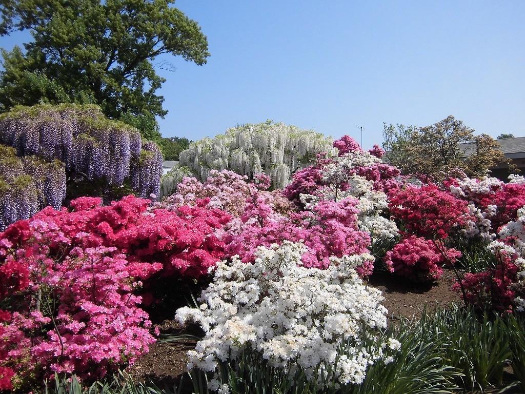 2015-5-2-ashikaga-flowerpark-0885