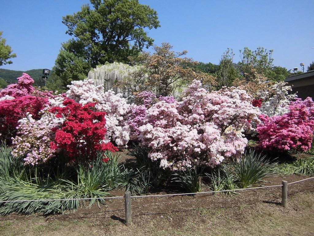 2015-5-2-ashikaga-flowerpark-0886