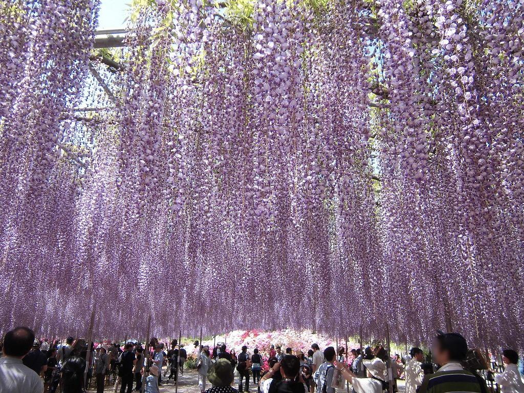 2015-5-2-ashikaga-flowerpark-0935