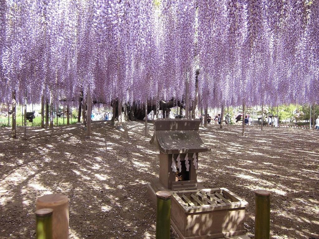 2015-5-2-ashikaga-flowerpark-0939