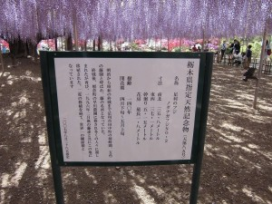 2015-5-2-ashikaga-flowerpark-0942