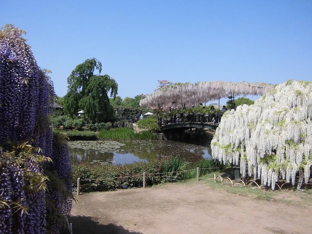 2015-5-2-ashikaga-flowerpark-0952