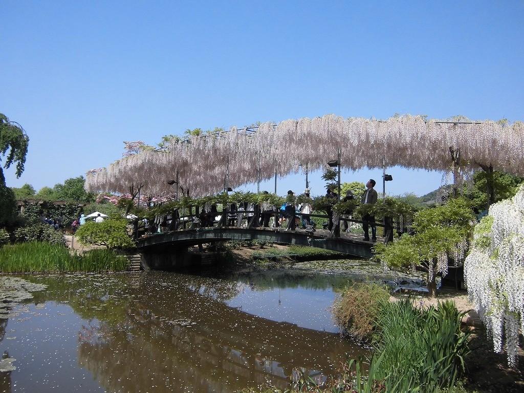 2015-5-2-ashikaga-flowerpark-0954