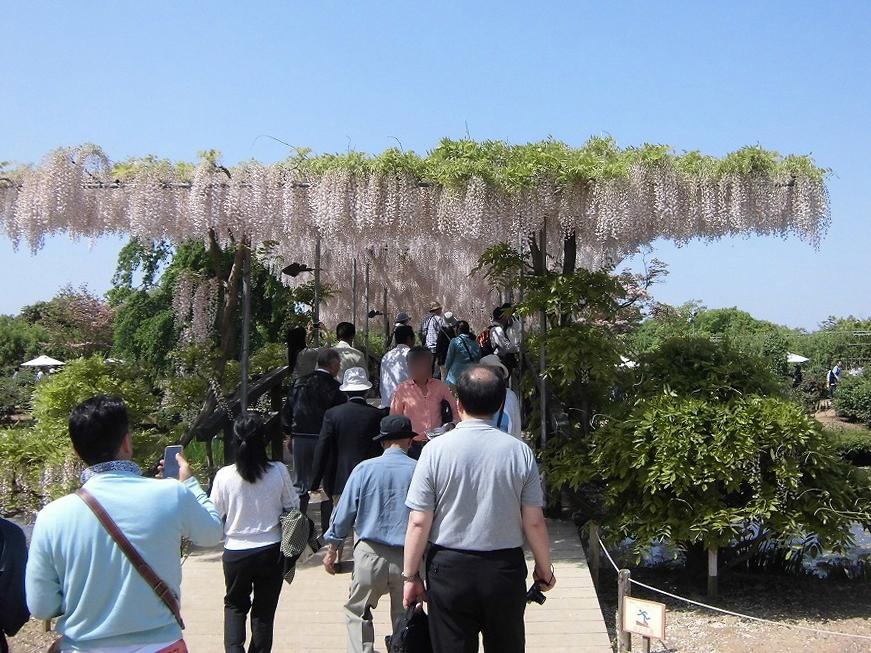 2015-5-2-ashikaga-flowerpark-0955-2