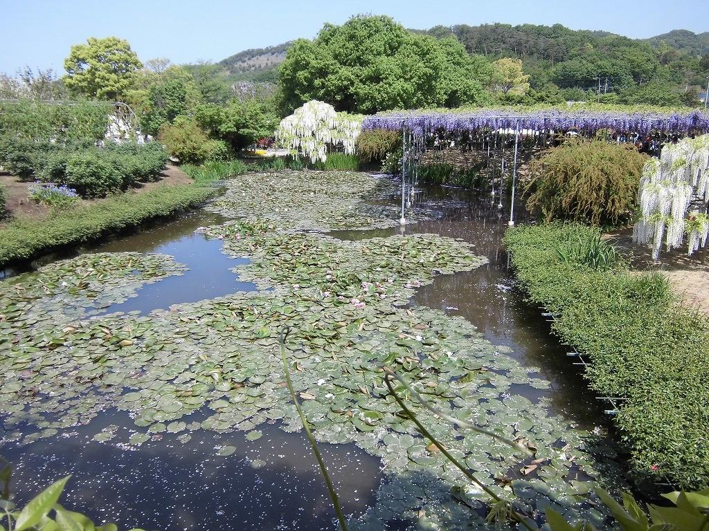 2015-5-2-ashikaga-flowerpark-0958
