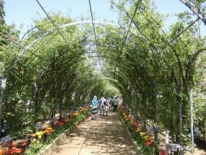 2015-5-2-ashikaga-flowerpark-0965