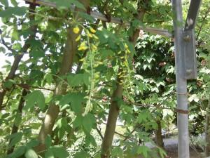 2015-5-2-ashikaga-flowerpark-0967