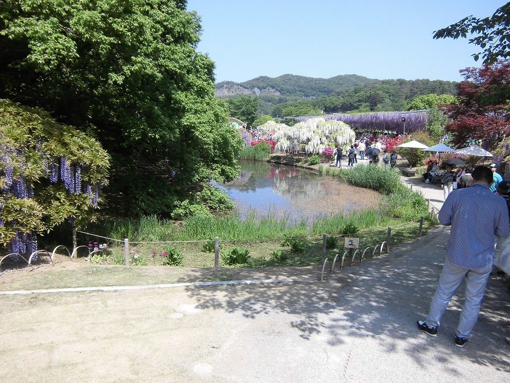 2015-5-2-ashikaga-flowerpark-0971