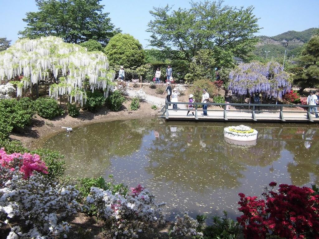 2015-5-2-ashikaga-flowerpark-0990