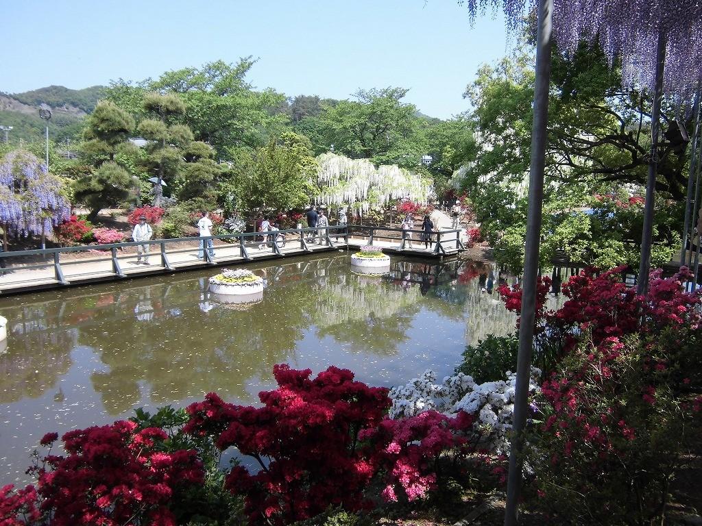 2015-5-2-ashikaga-flowerpark-0991