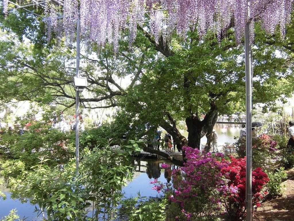 2015-5-2-ashikaga-flowerpark-0994
