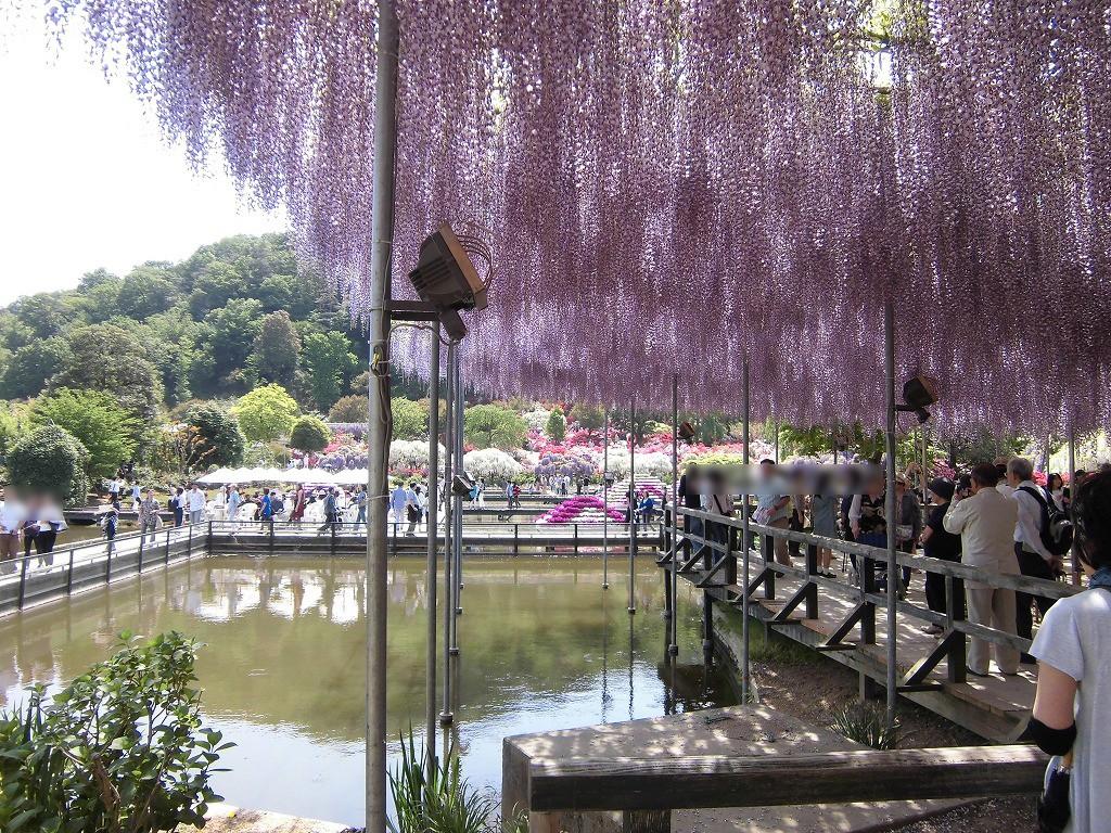 2015-5-2-ashikaga-flowerpark-0995