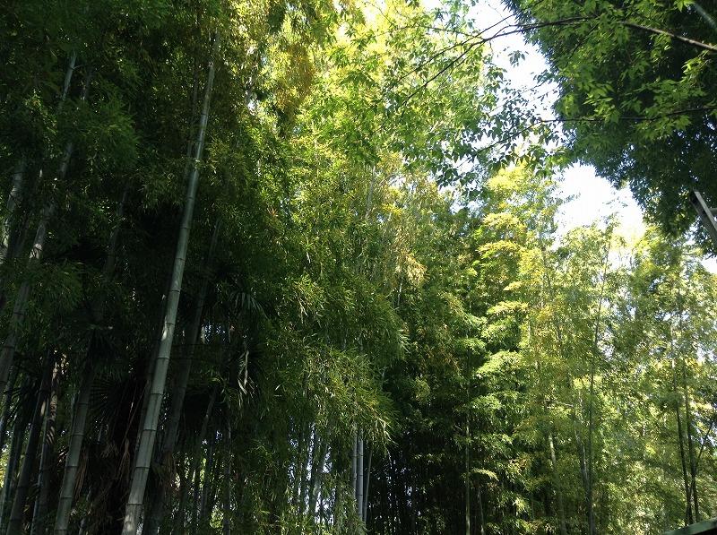 senzokuike-park-0526
