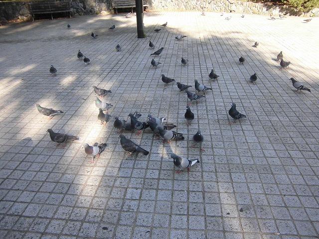 sapporo-city-nakajima-park-2561