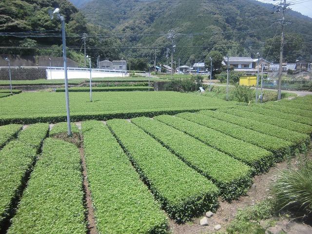 shizuoka-okuooi-kojyou-trip-2015-07-2834