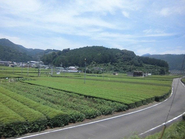 shizuoka-okuooi-kojyou-trip-2015-07-2847