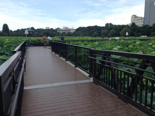 ueno-onshi-park-2015-07-2894
