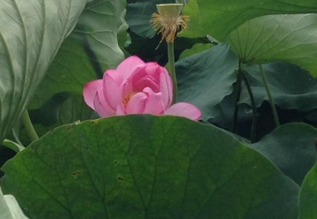 ueno-onshi-park-2015-07-2908-3