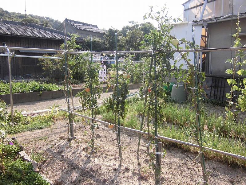2015-08-setouchi-inujima-3834