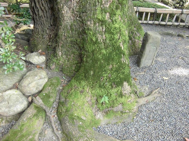 saitama-kumagaya-2015-08-3441