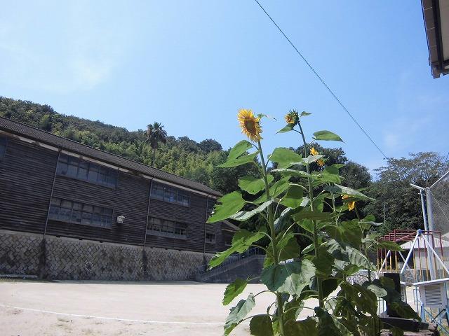 2015-08-kasaoka-manabeshima-4233